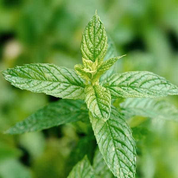 Formation-aromathérapie-accompagnement-apoticarius-4